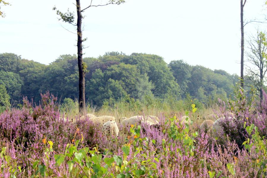 Schouders onder Boerke en Landschapspark