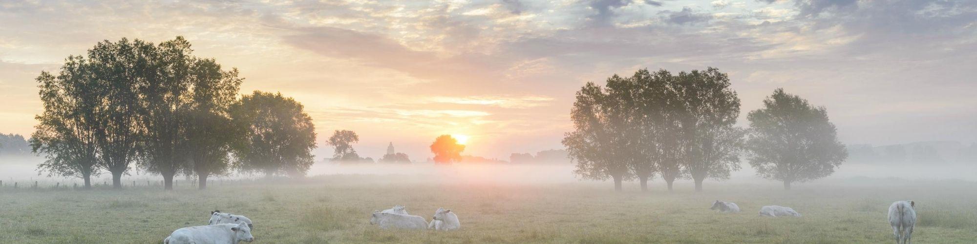 Nieuwe gratis toeristische kaarten Vlaamse Ardennen