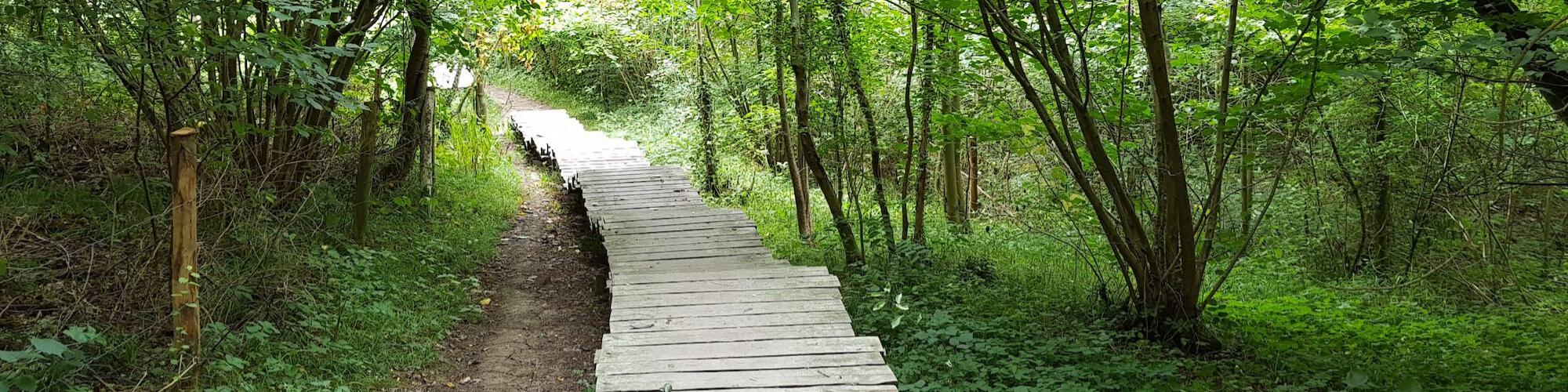 Het bos in, met Woudlopen